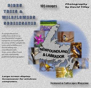 Download Western Wildflowers 2.0 Free Trial - Beautiful views of